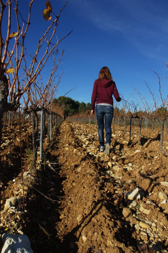 vigne la Rocaliere