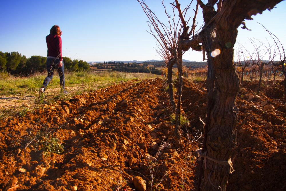 vignoble rocaliere
